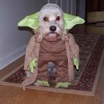 nerd_dog